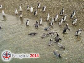 PATAGONIA_8.jpg